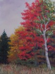 Hill - White Birch, Red Maple